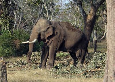 Best National Park in India, Jim Corbett National Park, Uttarakhand