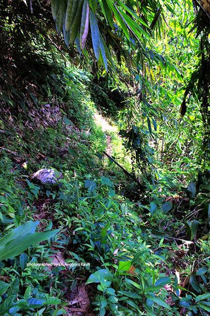 Kondisi jalan setapak menuju curug Gobang