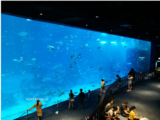 cara menuju sea aquarium dari vivo city