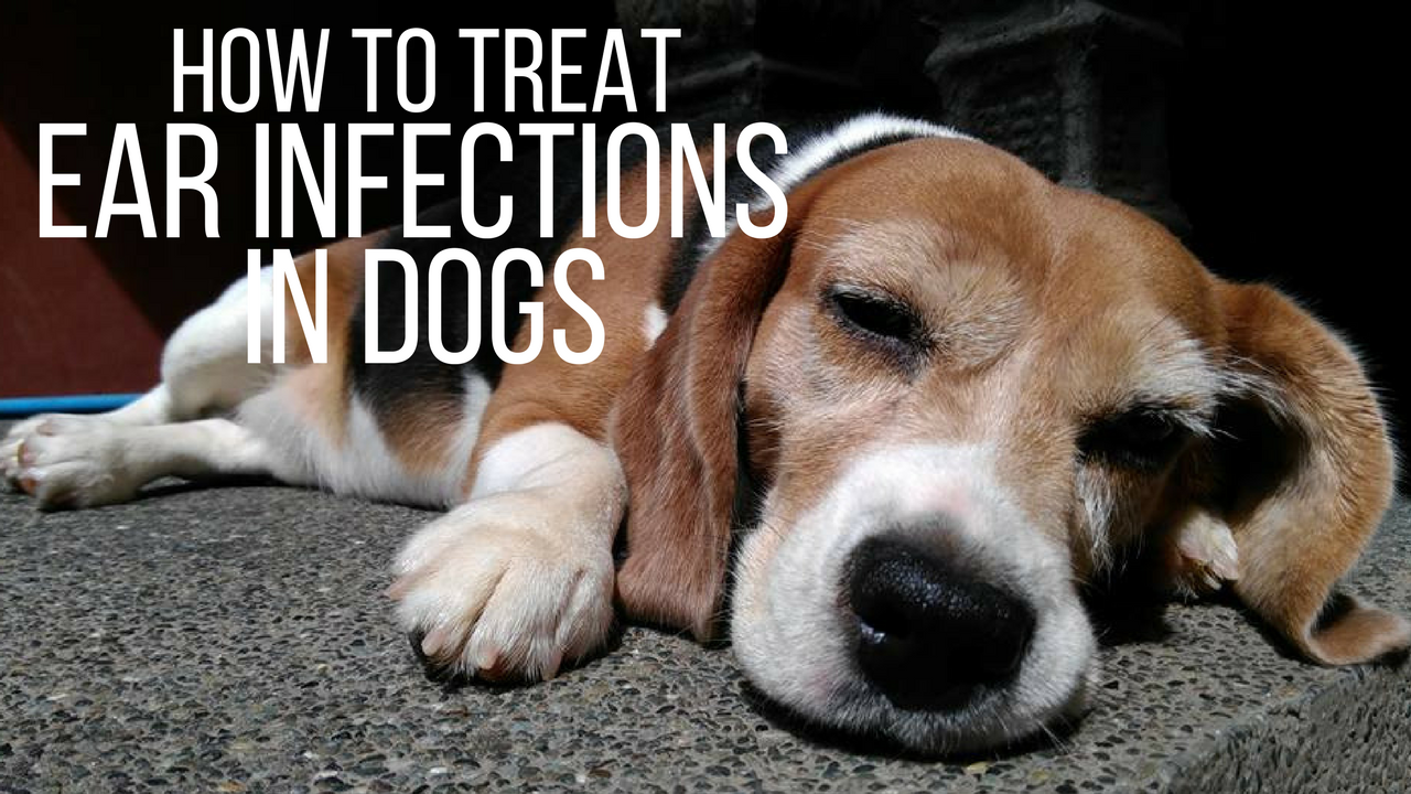 Best Way To Treat Ear Mites In Dogs
