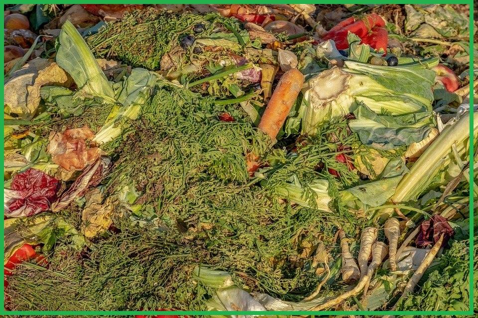 سؤال و جواب في التسميد : ما هي أهم الوظائف الفسيولوجية للعناصر الغذائية ودورها في نمو محاصيل الفاكهة ؟