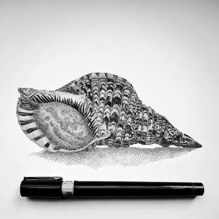 07-Seashell-Carole-Levy-www-designstack-co