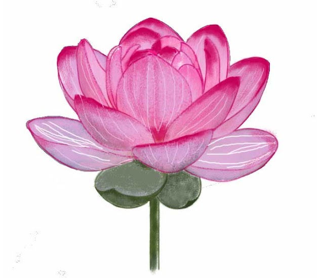 How to draw a lotus flower step by step easy lotus drawing for kids with color