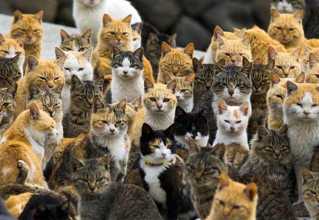 Kucing Berkembiak Pesat