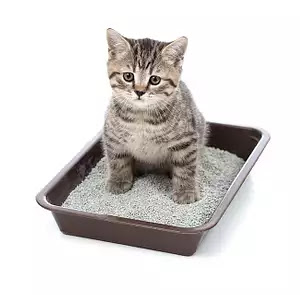 Symptoms of urine retention in cats and methods of treatment | cat and dogs