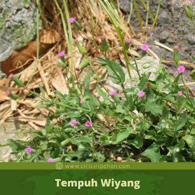 Tempuh Wiyang