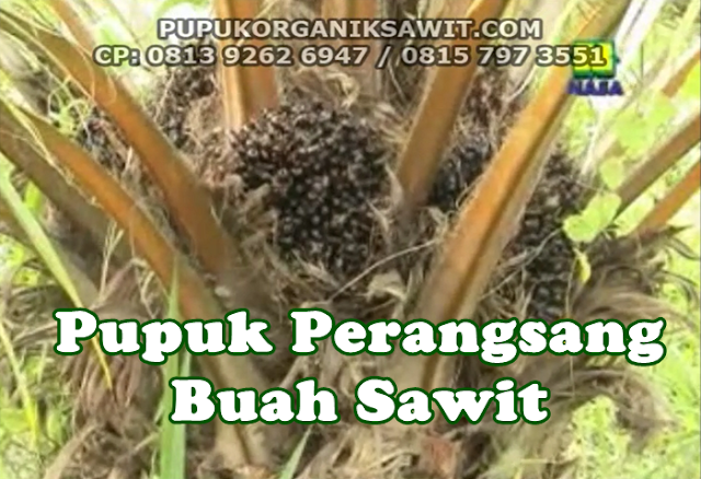pupuk perangsang buah sawit nasa organik