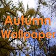 Wallpaper 'Autumn'