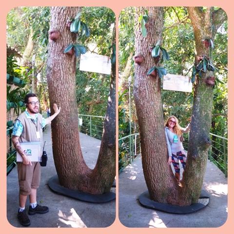 Árvore dos desejos no Tour Ecológico do Bondinho Pão de Açúcar