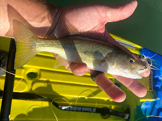 Pat Kellner, Guadalupe Bass, Fly Fishing, Fly Fishing Texas, Texas Fly Fishing, South Llano River, Fly Fishing the South Llano River, Improved SMP