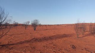Australijski outback na czerwonej ziemi