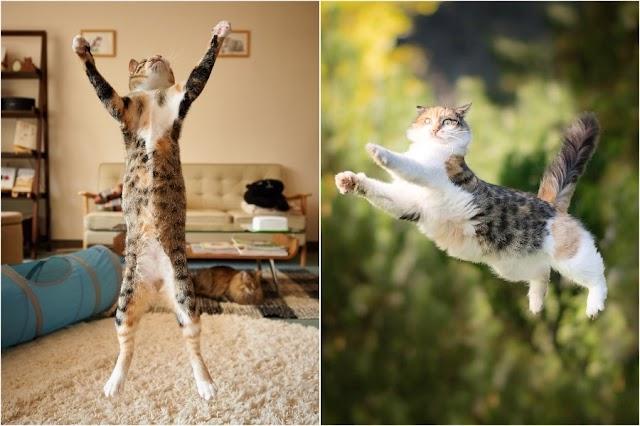Gatos Voladores Definitivos