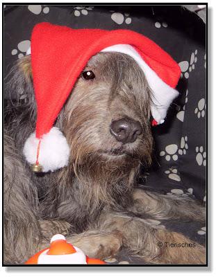 Bringt der Weihnachtsmann auch Hunden etwas, Weihnachtsgeschenke für Hunde