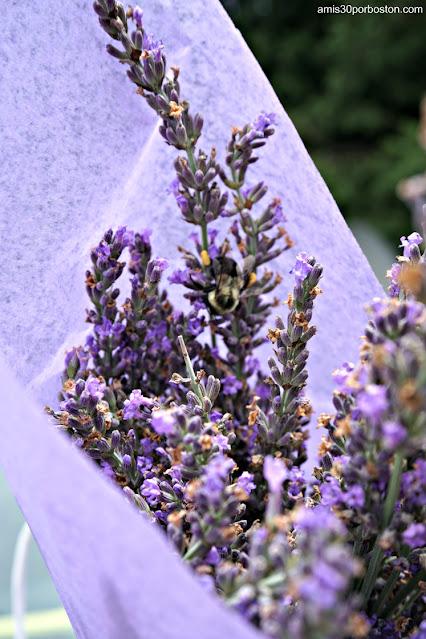 Ramo de Laromay Lavender Farm en Hollis, New Hampshire