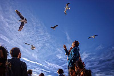 Volano: canto di speranza nella pandemia