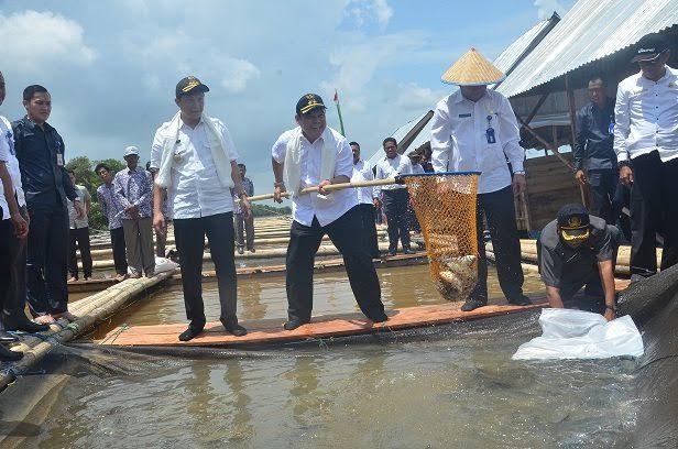 Bupati Ogan Ilir Panen Raya di Pemulutan