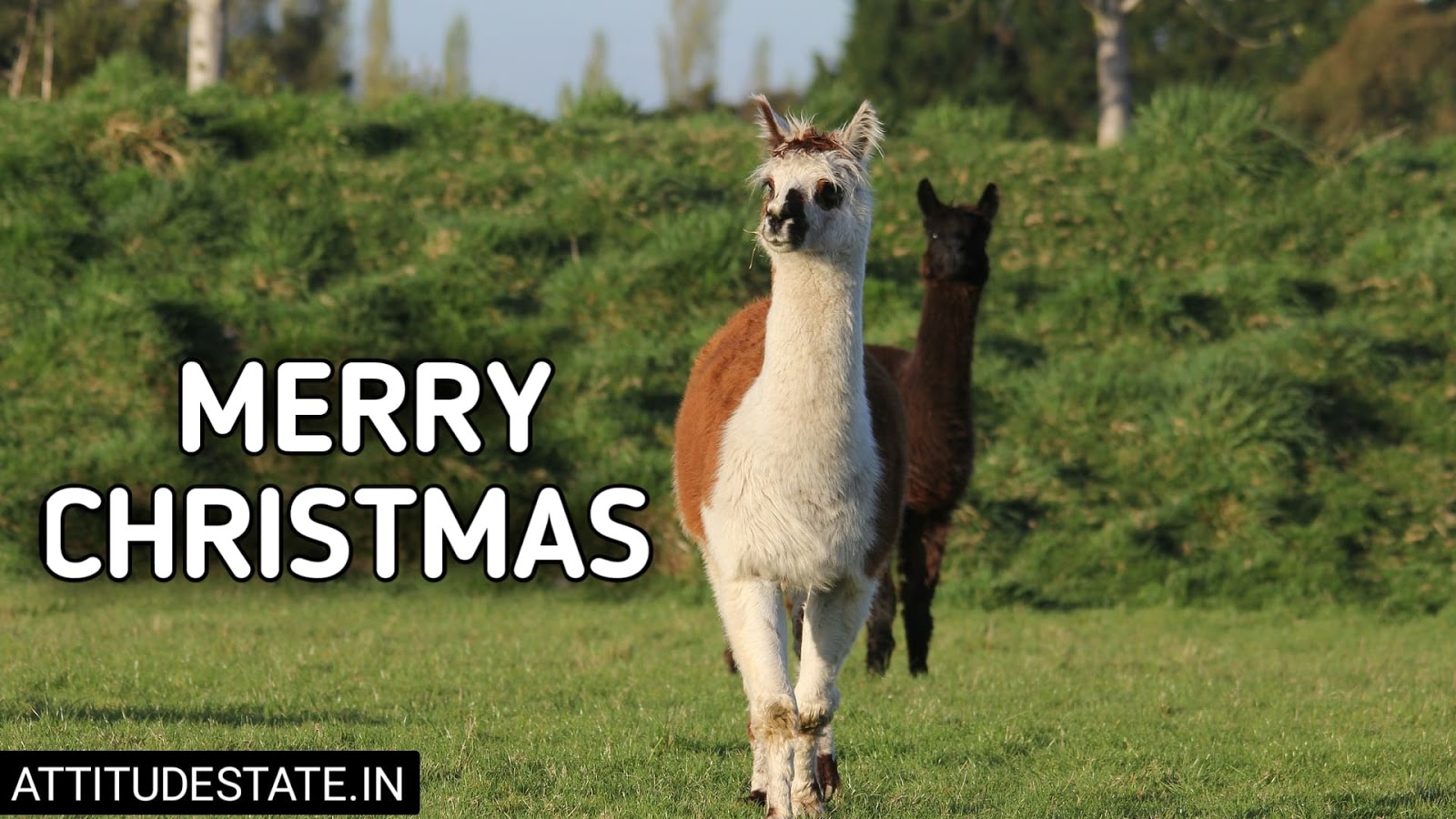 funny merry christmas messages greetings