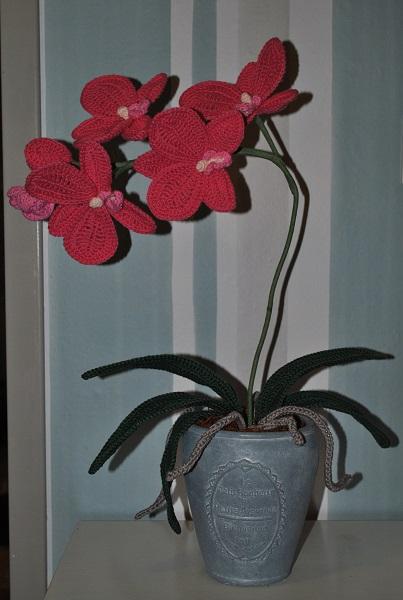Twee Steekjes Los Mysterie Eekhoorn En Orchidee