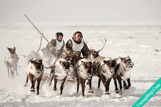 Bộ tộc ăn thịt sống ở Bắc Cực
