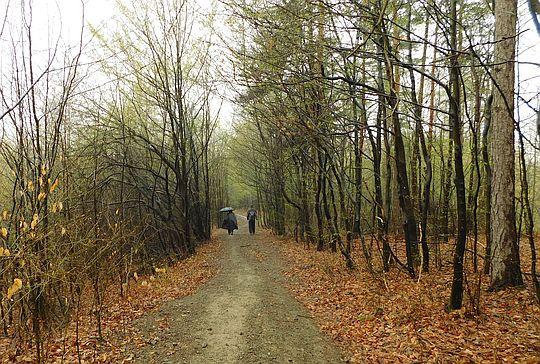 Zejście do wsi Ponikiew.