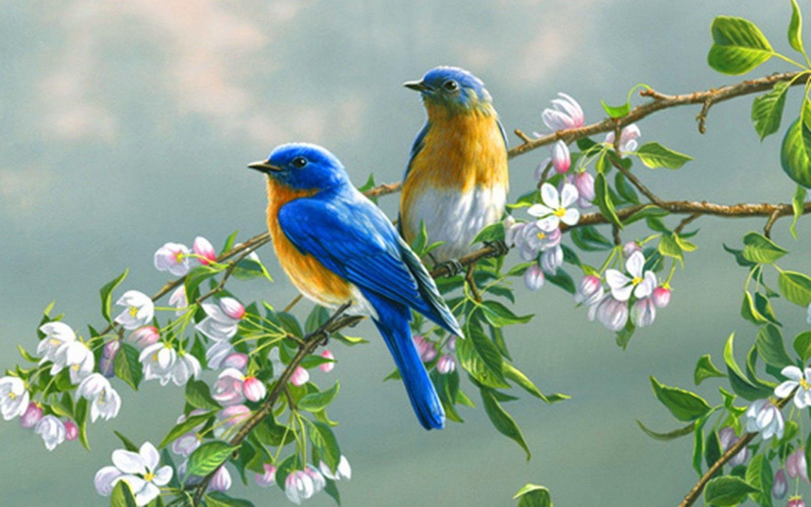Birds Wallpapers animals pictures