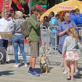 オスロで見かけた柴犬