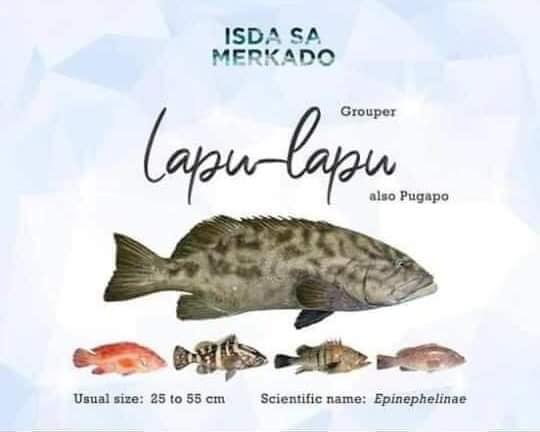 Isda Lapu-Lapu / Pugapo (Gouper) lapulapu Fish