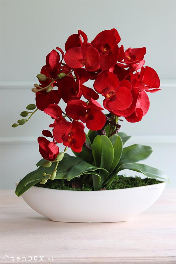 Kwiaty doniczkowe dla Wygodnych Poszukiwaczy Piękna