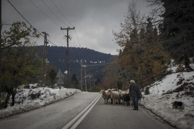 Τρίκαλα: Βοσκοί έμειναν «θαμμένοι» 18 ώρες στο χιόνι