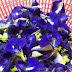 Misi Mencari Bunga Telang Tercapai Cari Punya Cari Bunga Telang Akhirnya Jumpa Juga