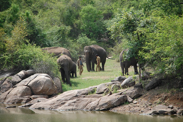 Bannerghatta-National-Park-Bangalore