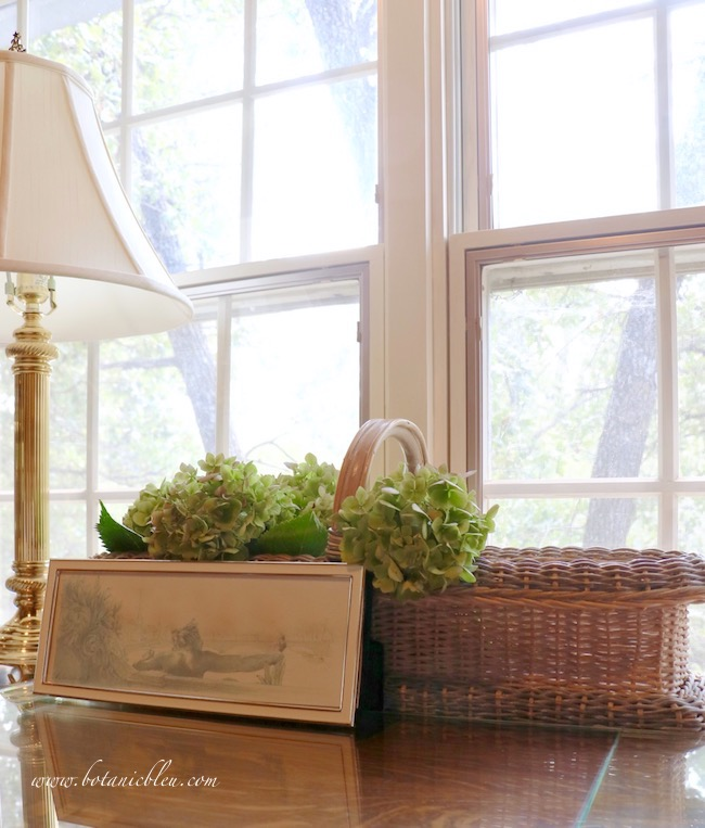 Summer fades into fall with drying green hydrangeas in a home office
