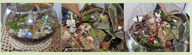Exotic DIY Miniature Plant Terrarium