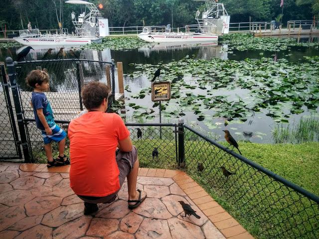 everglades unschooling alligator