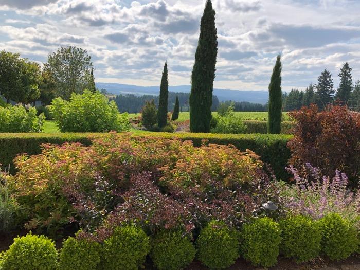 Alloro Vineyard view Oregon