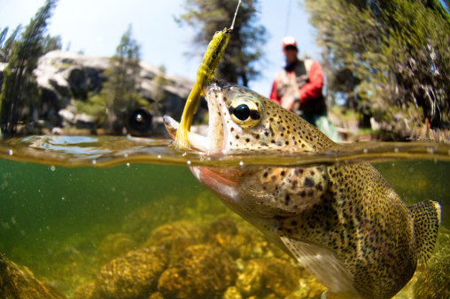 Trout Fishing Tips – For Catching More