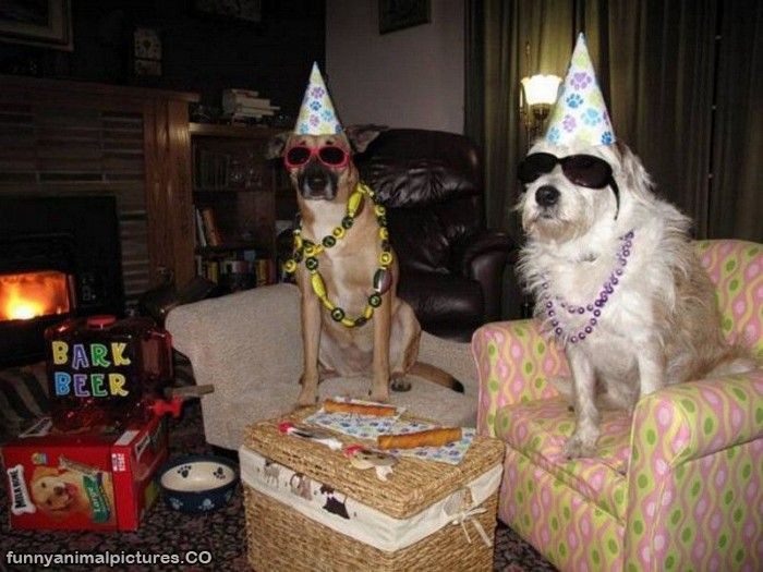 funny pictures: funny animal birthday pictures