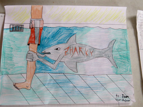 drawing of a shark
