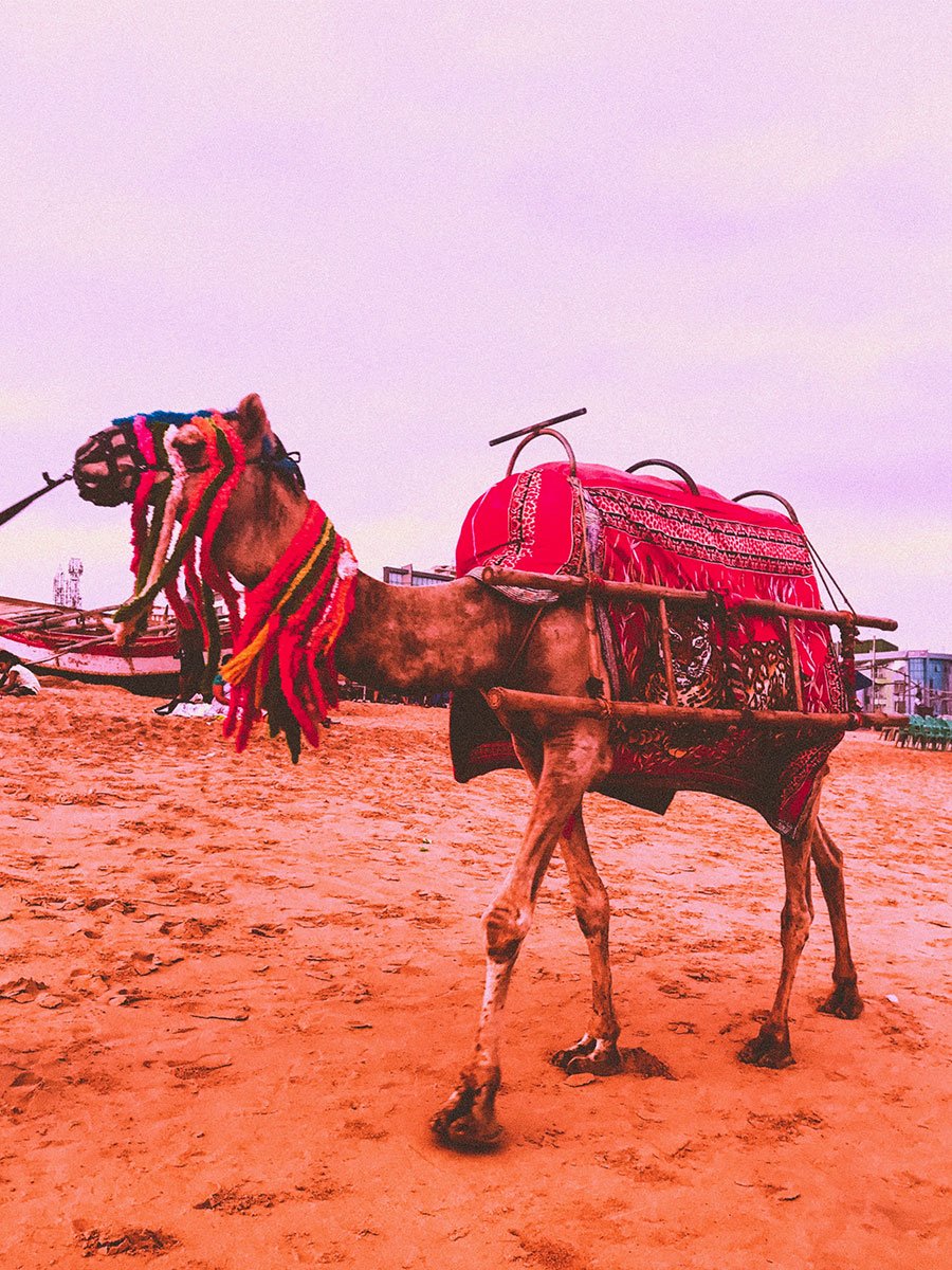 PURI camel ride, ODISHA INDIA TRAVEL places, travel blog