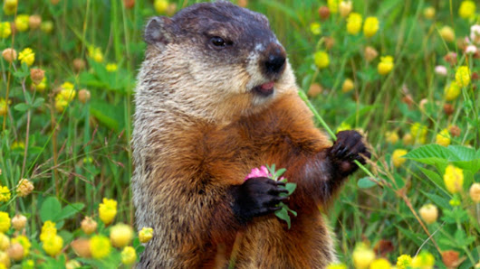 Groundhog Day 2015: Honoring Right Timing!