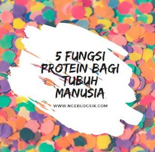fungsi protein bagi tubuh brainly fungsi protein bagi tubuh pdf fungsi protein nabati fungsi protein bagi tubuh ternak protein adalah fungsi lemak sumber protein berikut ini yang bukan fungsi protein dalam suatu sel adalah
