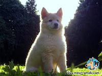 Cachorro Can de Palleiro al Sol