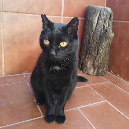 black cat sitting on terracotta tiled floor