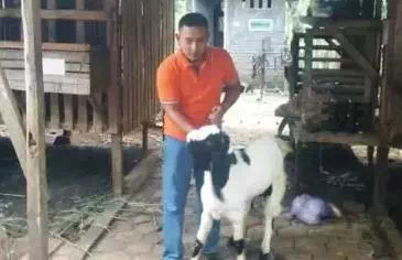 Saat Reuni Sekolah Ia Dihina Karena Gembala Kambing Saat Kecil, Selanjutnya Mereka Malu Karena Ini