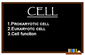 Prokaryotic and Eukaryotic cell, Cell Function
