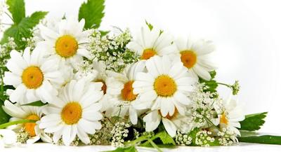 Tanaman Hias Bunga