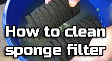 How to clean sponge filter in fish tank