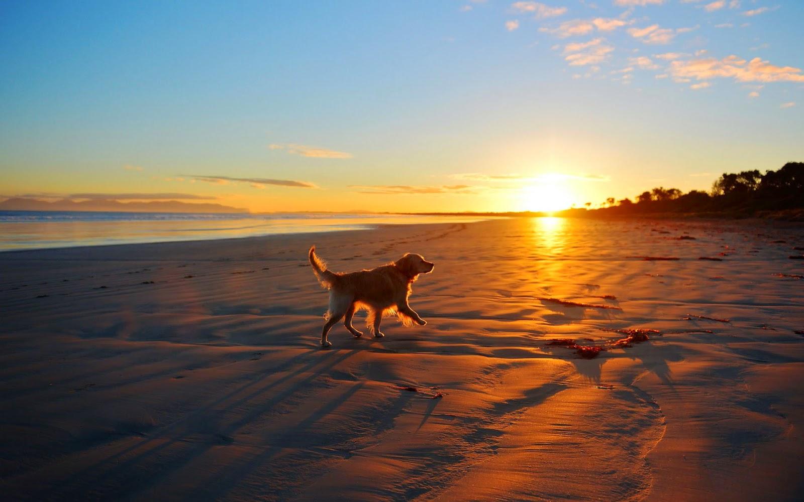 Hond op het strand tijdens zonsondergang