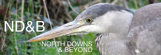 NORTH DOWNS & BEYOND