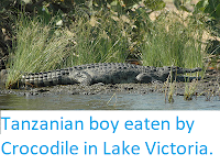 https://sciencythoughts.blogspot.com/2019/10/tanzanian-boy-eaten-by-crocodile-in.html